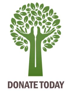 Need to grow more trees essay